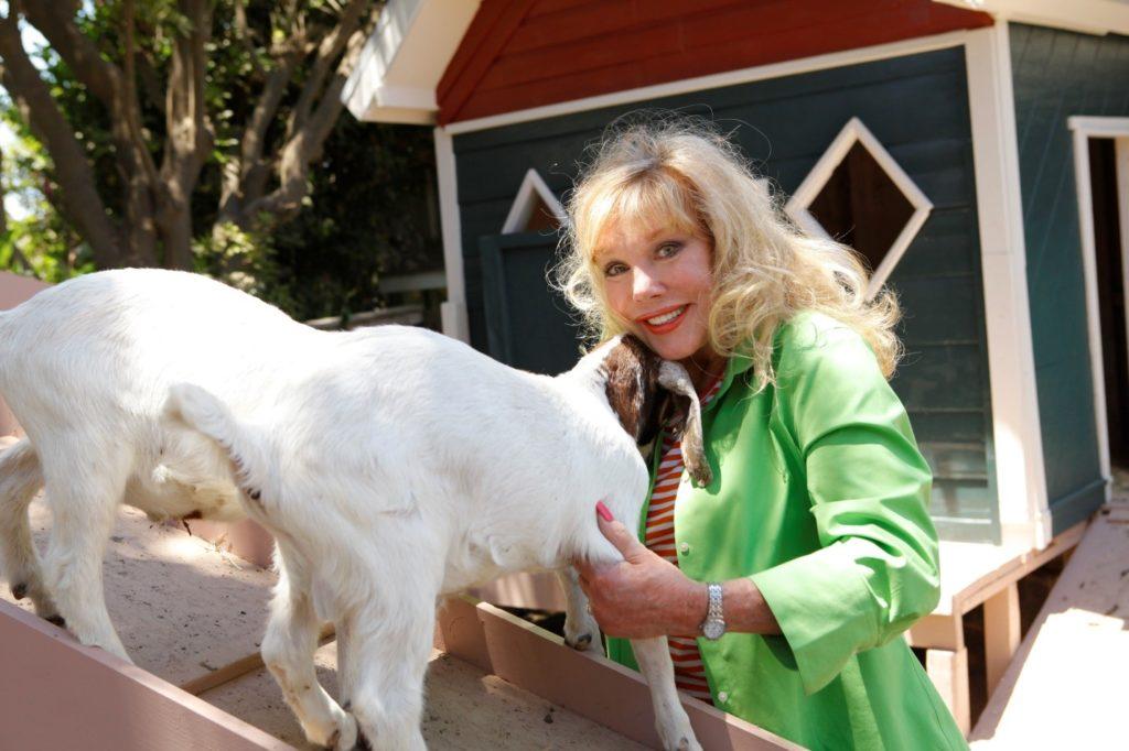 2 goats mom