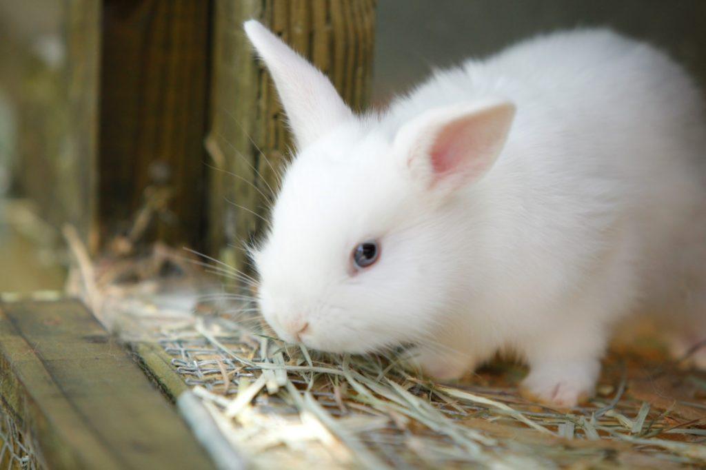 baby bunny closeup 2